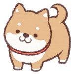 フランス人ユーチューバーに飼われた、日本生まれの柴犬のその後